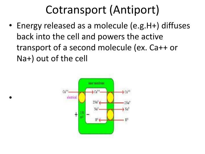 Cotransport (Antiport)