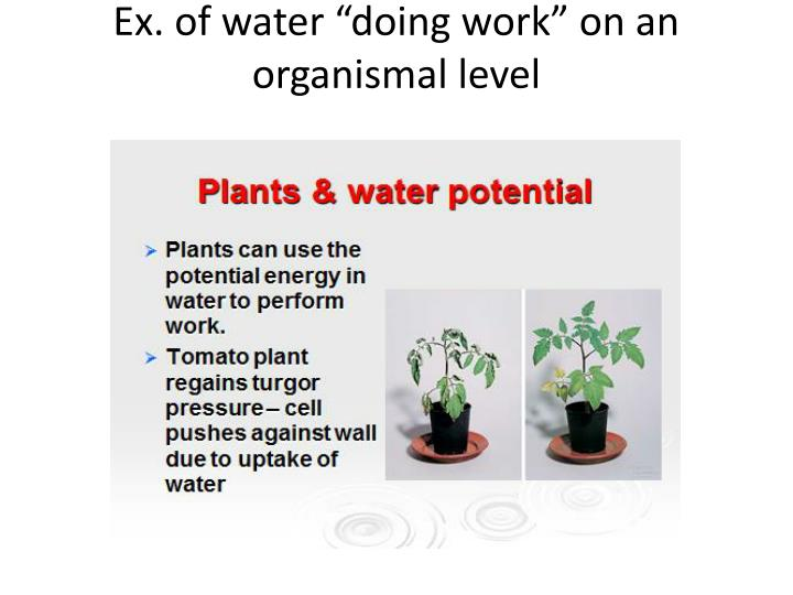 "Ex. of water ""doing work"" on an organismal level"