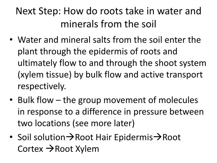 Next Step: How do roots take in water and minerals from the soil