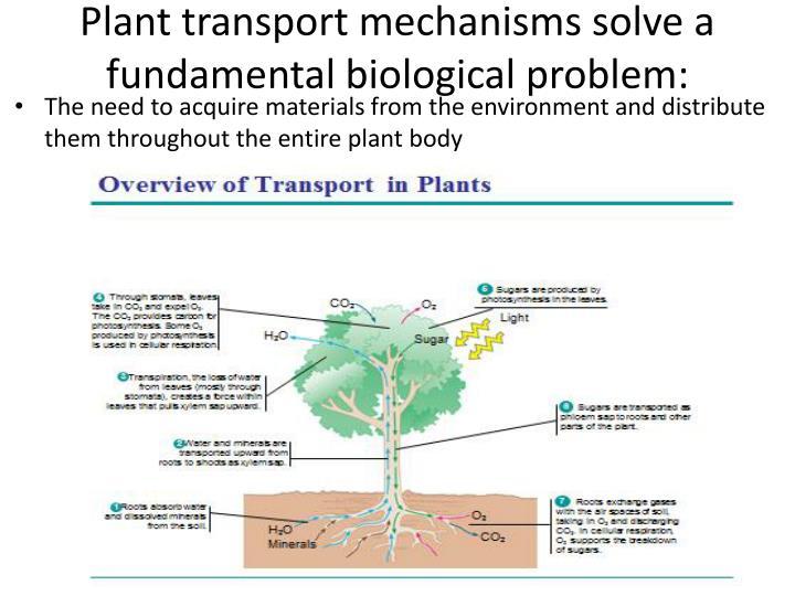 Plant transport mechanisms solve a fundamental biological problem: