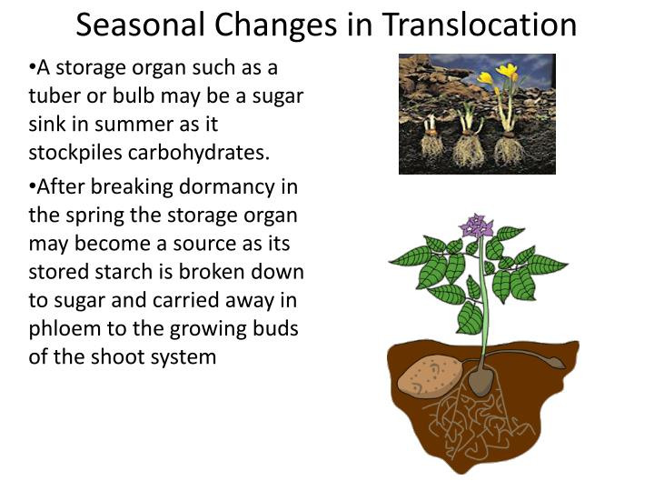 Seasonal Changes in Translocation
