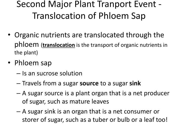 Second Major Plant