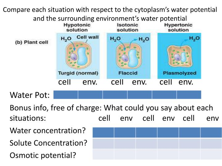 Compare each situation with respect to the cytoplasm's water potential and the surrounding environment's water potential