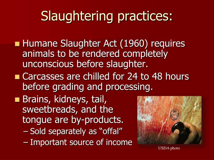 Slaughtering practices: