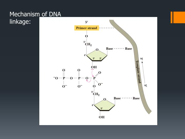 Mechanism of DNA linkage: