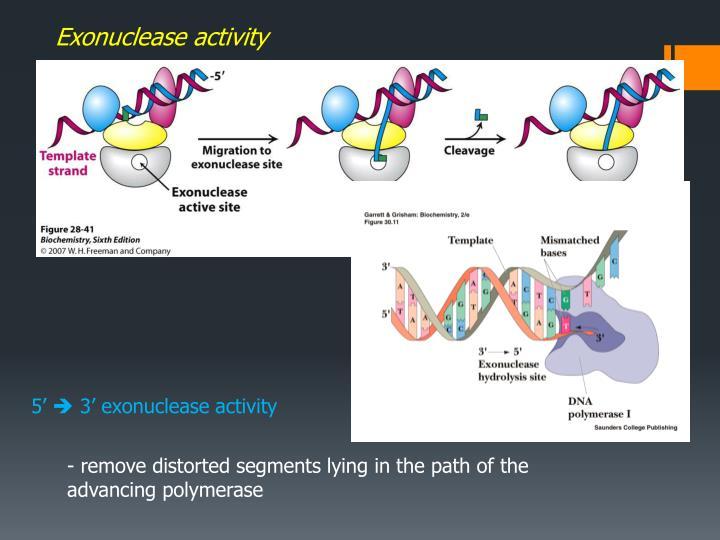 Exonuclease