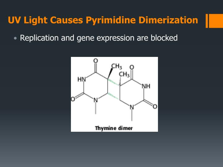 UV Light Causes Pyrimidine Dimerization
