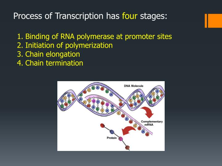 Process of Transcription has