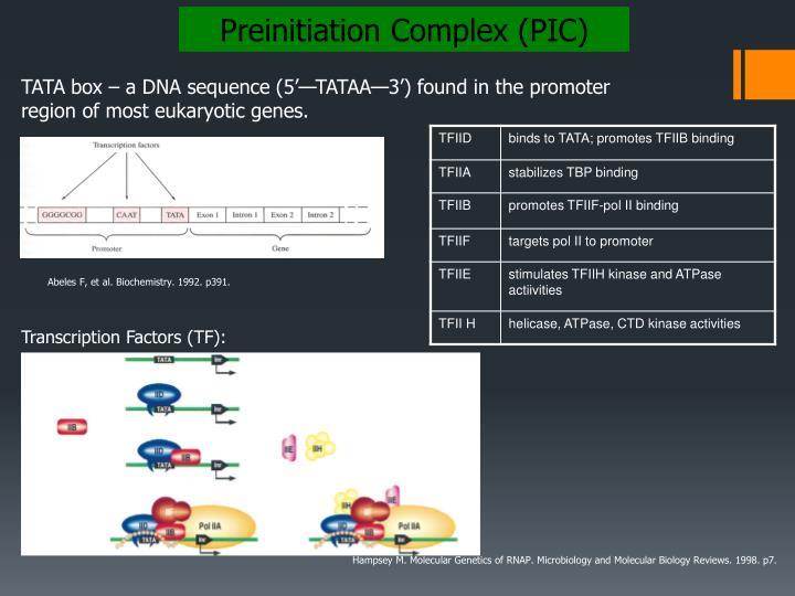 Preinitiation Complex (PIC)