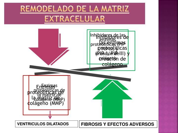 Remodelado de la matriz extracelular