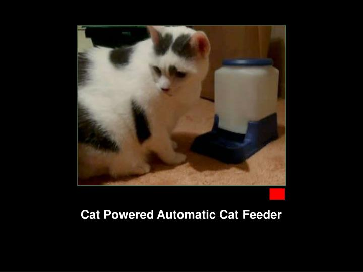 Cat Powered Automatic Cat Feeder