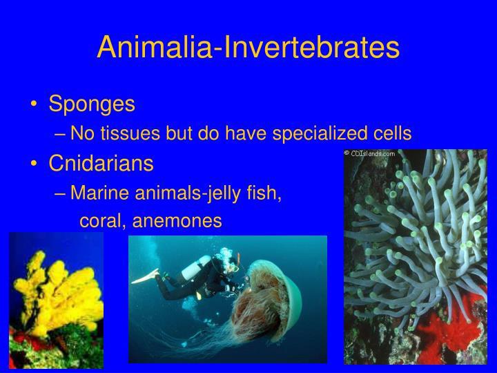 Animalia-Invertebrates