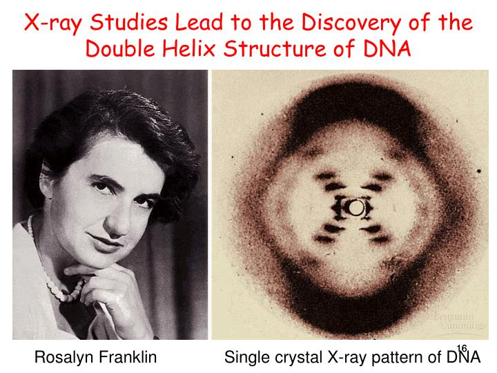X-ray Studies Lead to the Discovery of the Double Helix Structure of DNA