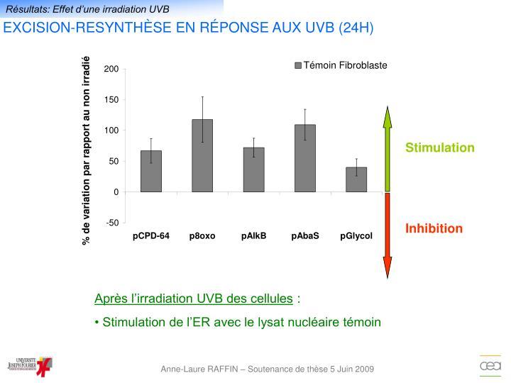 Résultats: Effet d'une irradiation UVB