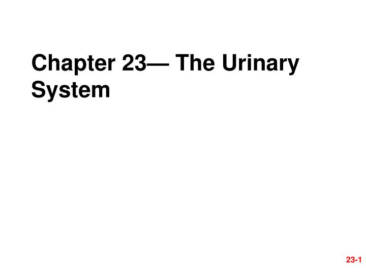 Chapter 23 the urinary system