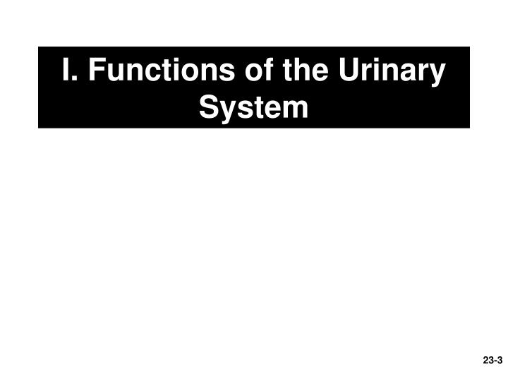 I functions of the urinary system