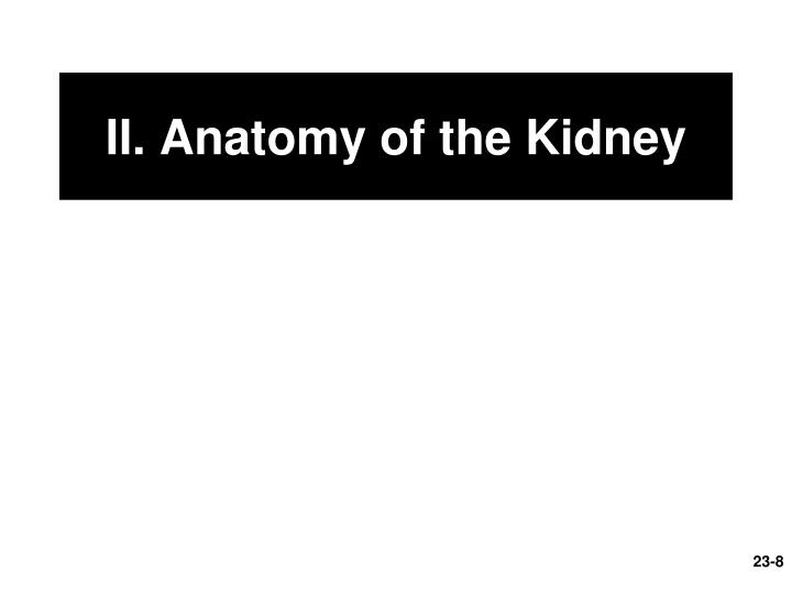 II. Anatomy of the Kidney