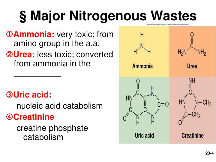 § Major Nitrogenous Wastes