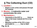 the collecting duct cd