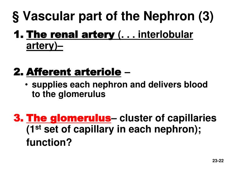 § Vascular part of the Nephron (3)