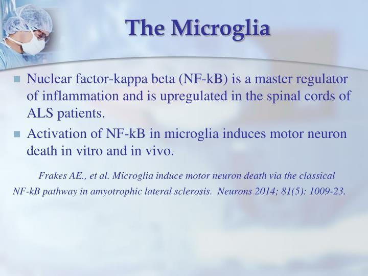The Microglia