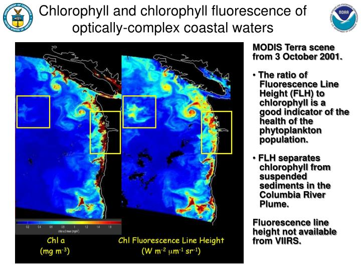 Chlorophyll and chlorophyll fluorescence of optically-complex coastal waters