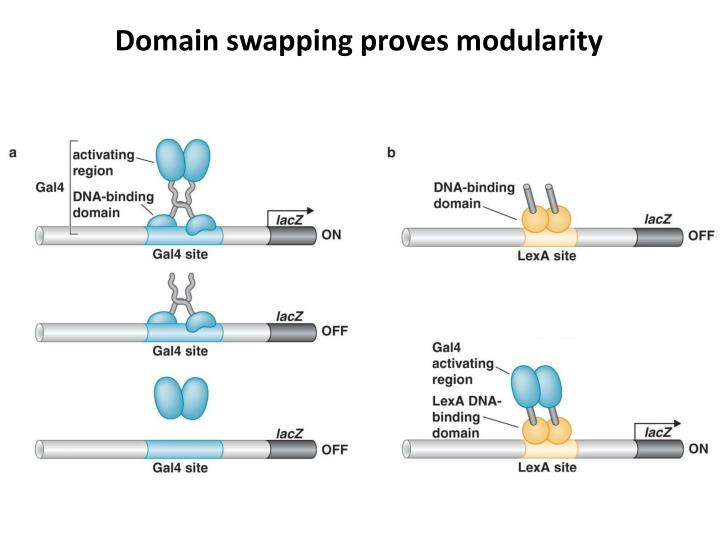 Domain swapping proves modularity