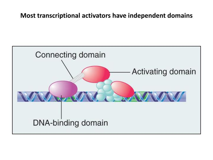 Most transcriptional activators have independent domains