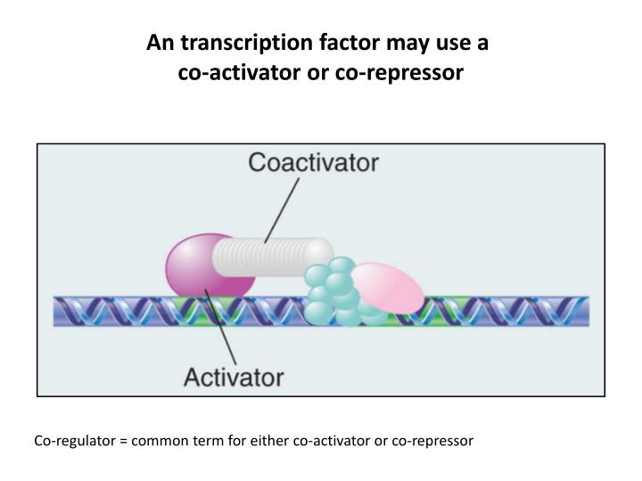 An transcription factor may use a