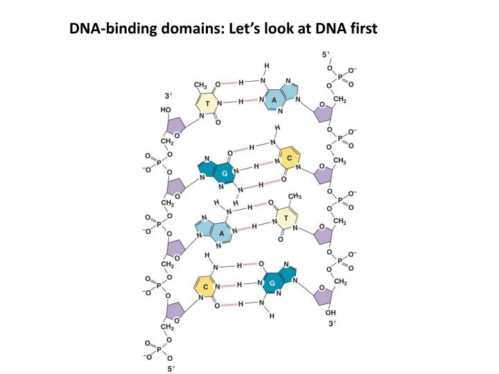 DNA-binding domains: Let's look at DNA first