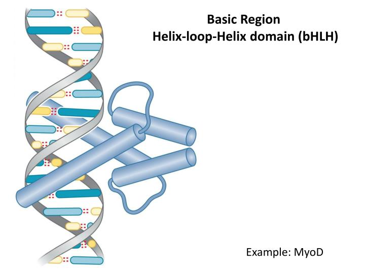 Basic Region