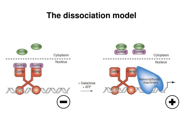 The dissociation model