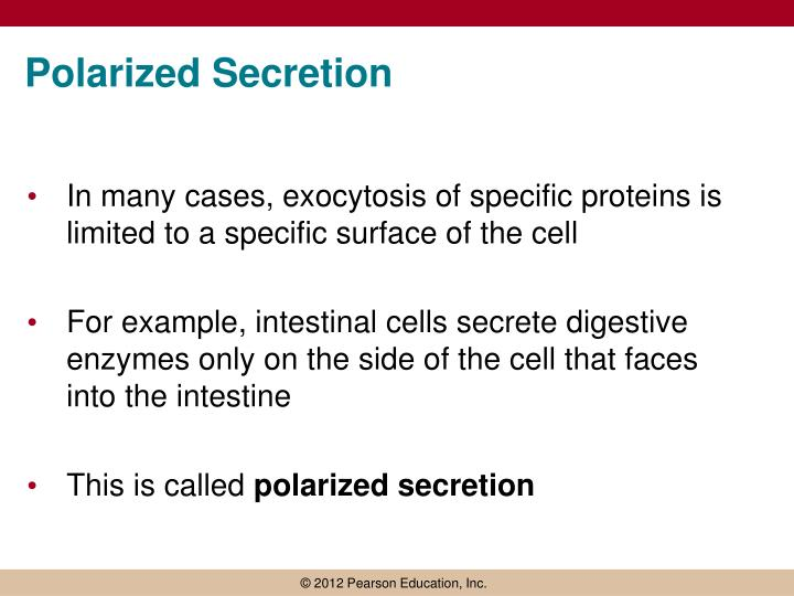 Polarized Secretion