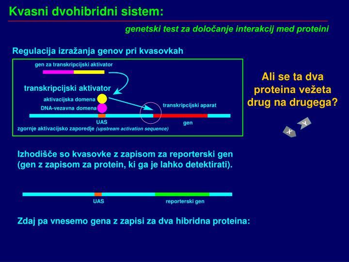 Kvasni dvohibridni sistem: