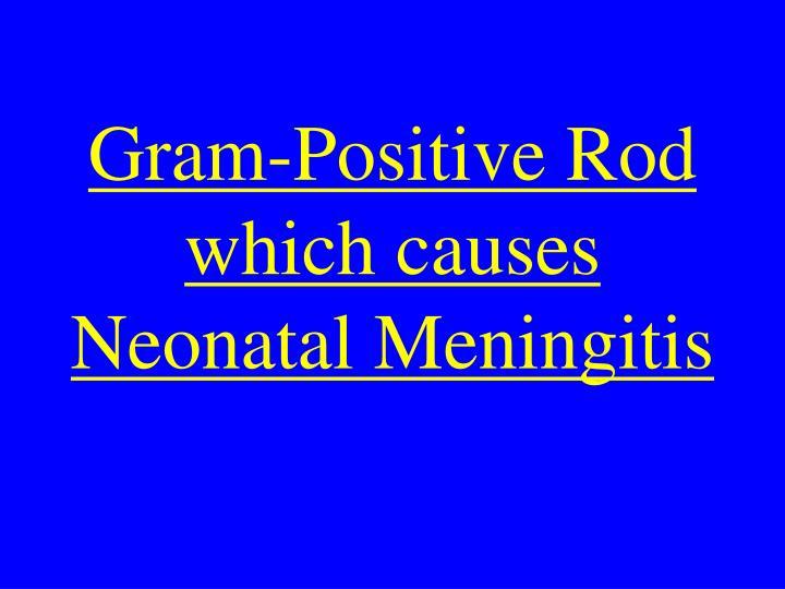Gram-Positive Rod which causes Neonatal Meningitis