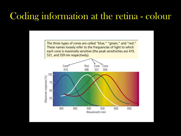 Coding information at the retina - colour