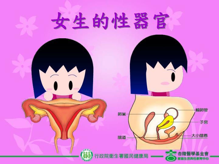 女生的性器官