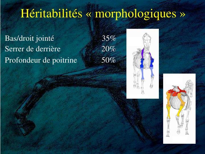 Héritabilités «morphologiques»