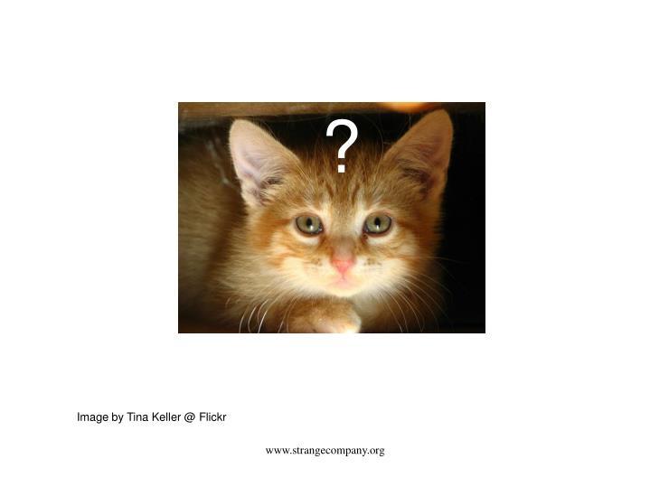 www.strangecompany.org
