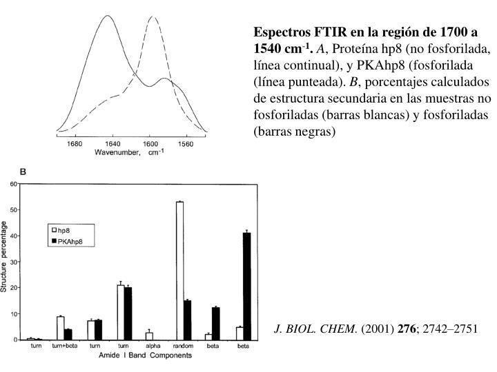 Espectros FTIR en la región de 1700 a 1540 cm