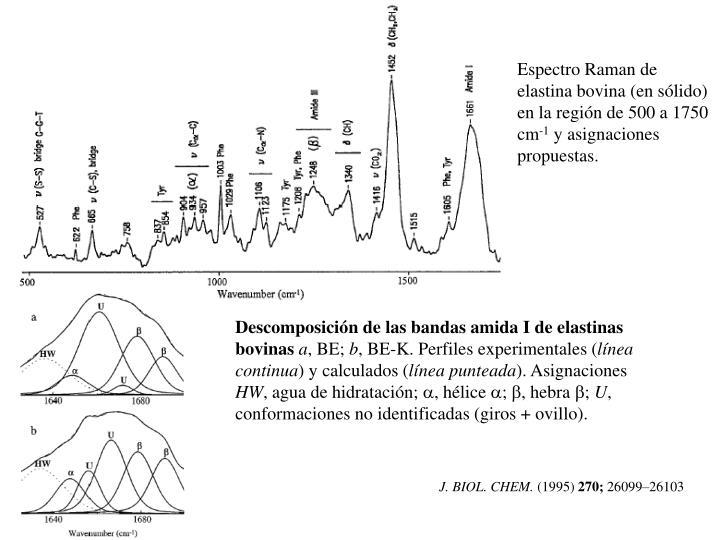 Espectro Raman de elastina bovina (en sólido) en la región de 500 a 1750 cm