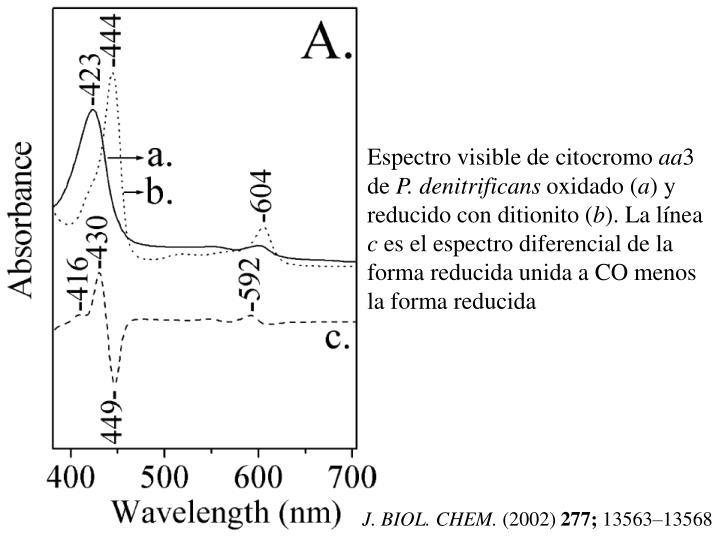 Espectro visible de citocromo