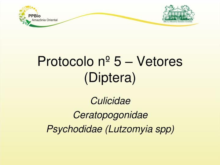 Protocolo nº 5 – Vetores