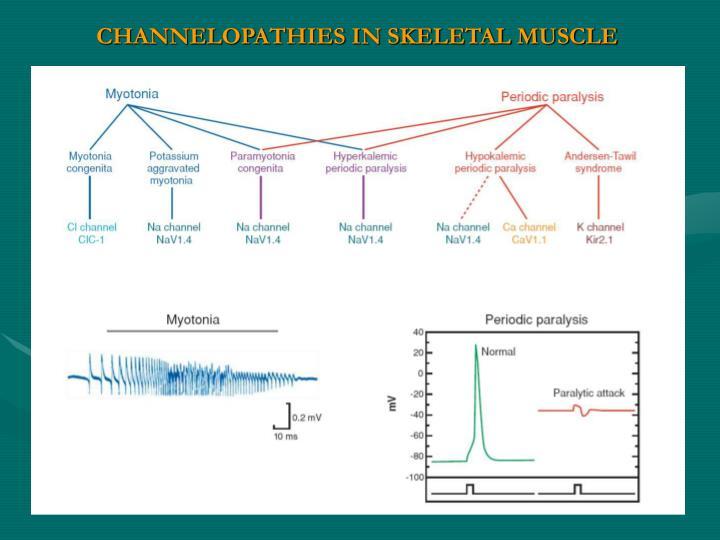 CHANNELOPATHIES IN SKELETAL MUSCLE