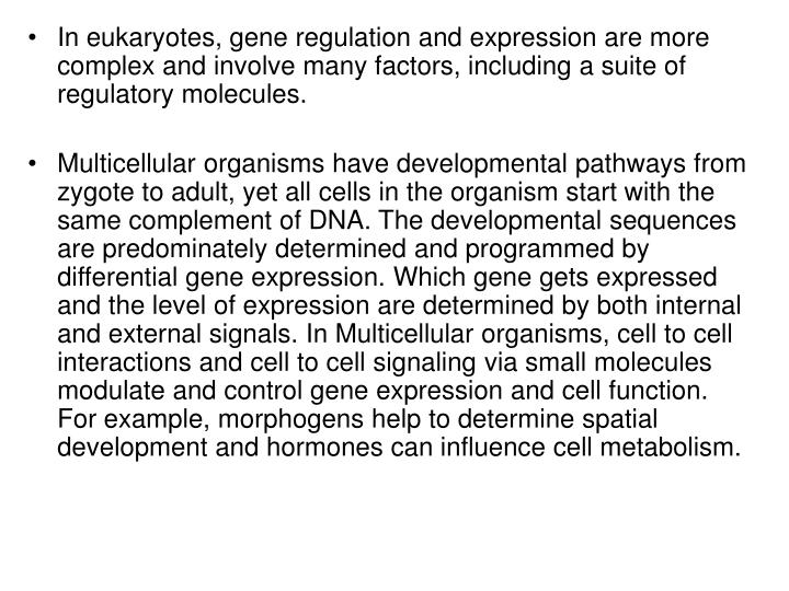 In eukaryotes, gene regulation and expression are more complex and involve many factors, including a suite of regulatory molecules.