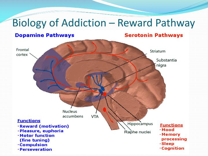 Biology of Addiction – Reward Pathway