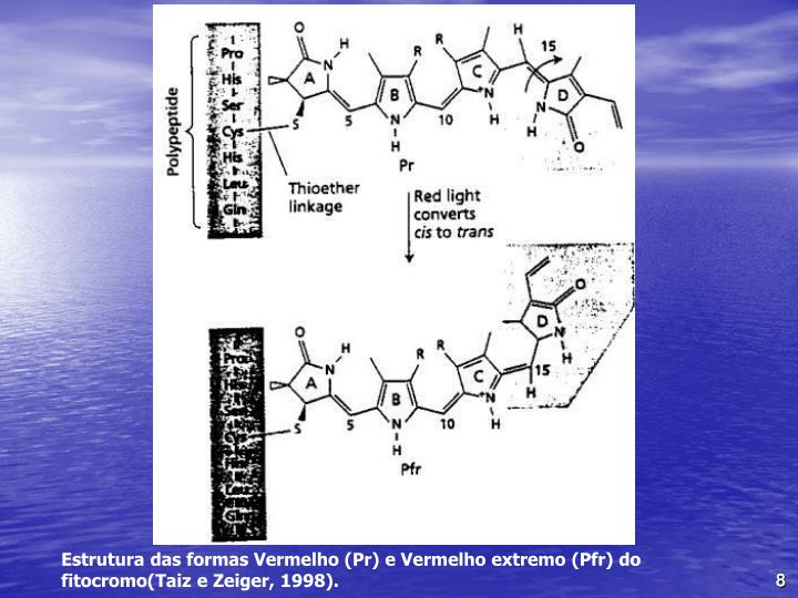 Estrutura das formas Vermelho (Pr) e Vermelho extremo (Pfr) do fitocromo(Taiz e Zeiger, 1998).
