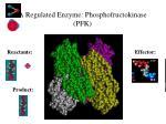 a regulated enzyme phosphofructokinase pfk