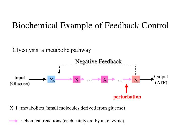 Biochemical Example of Feedback Control