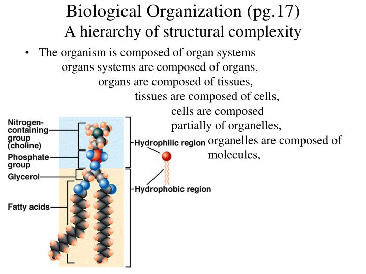 Biological Organization (pg.17)